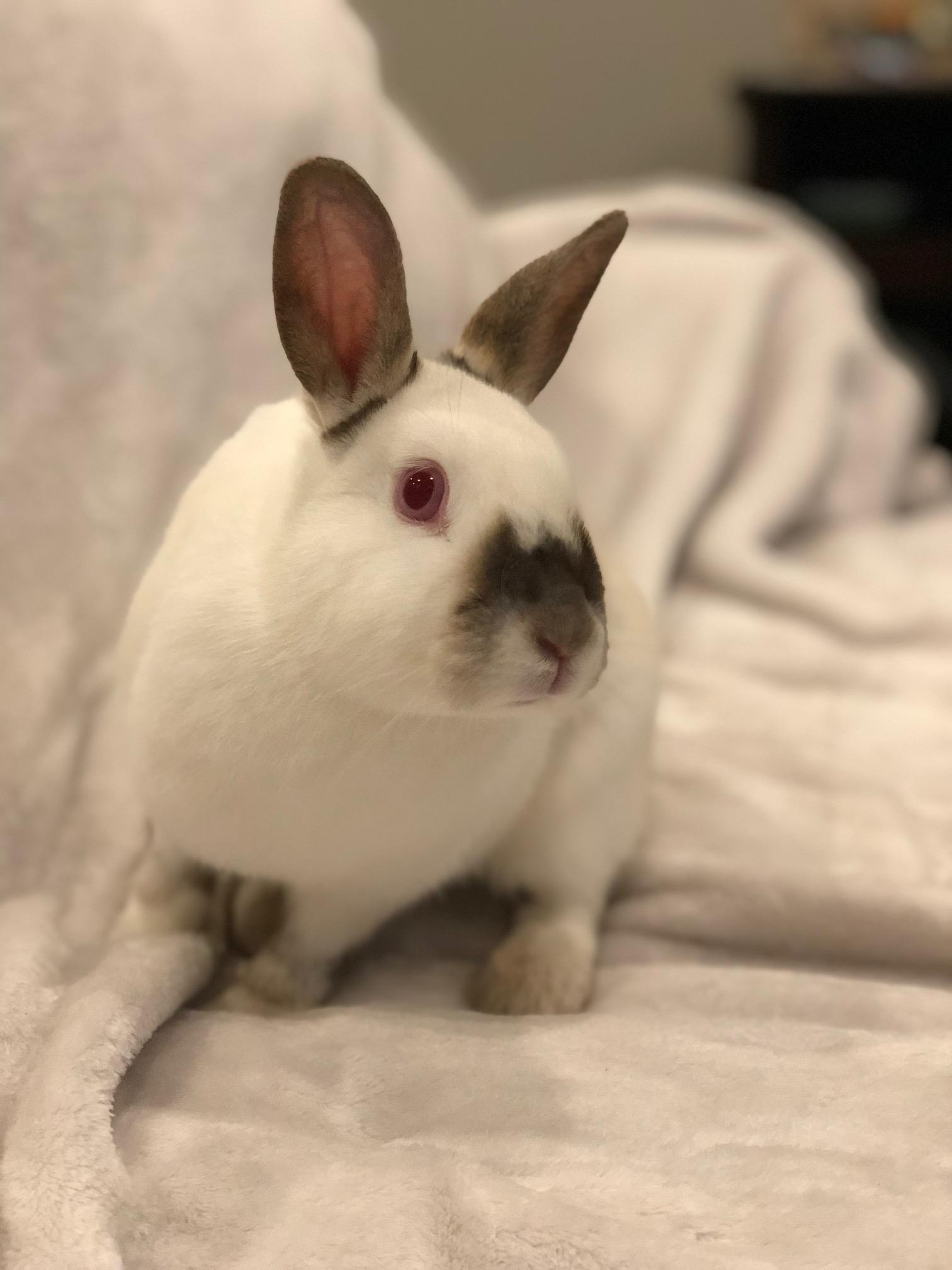 Hazlenut & Molly [Bonded Rabbits]