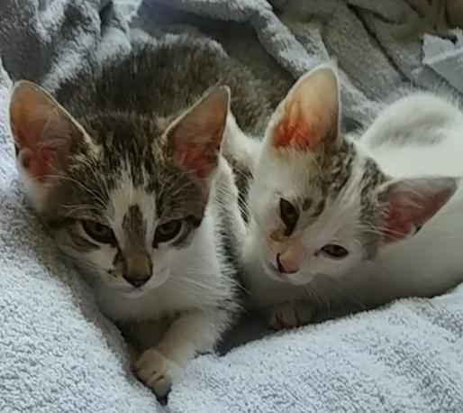 Percy & Piper