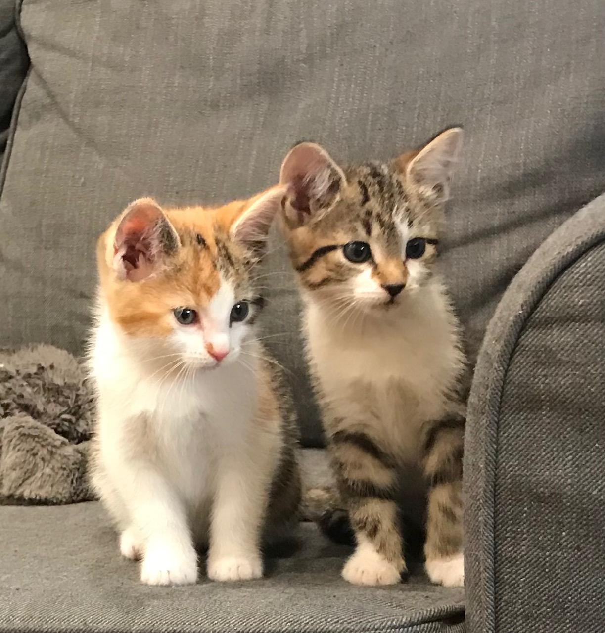 Lily & Bella